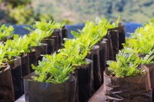 Растения оптом и в розницу