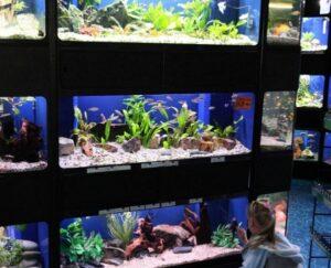 Интернет-магазин аквариумистики