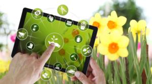 Преимущества покупки растений в питомнике онлайн