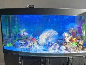 Чистка аквариумов под ключ
